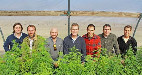City Roots partnering to create industrial hemp company