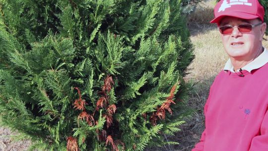 "Chip Fink, co-owner of Mystic Christmas Tree Farm, is expecting ""another great year."" (Photo/Clemson University)"